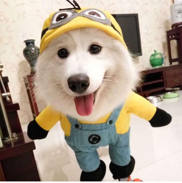 déguisement de minion pour chien et chat