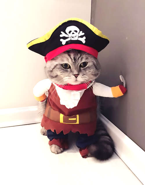 déguisement de pirate pour chat à l'Halloween