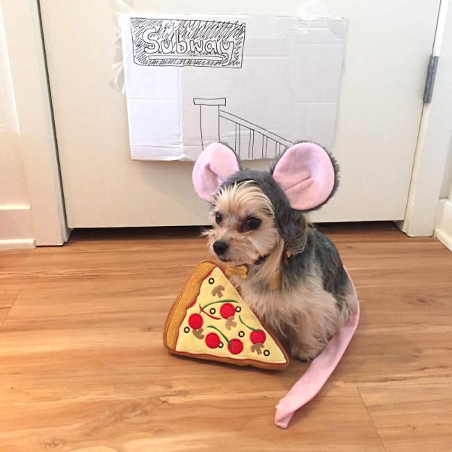 déguisement pour petit chien en souris et rat