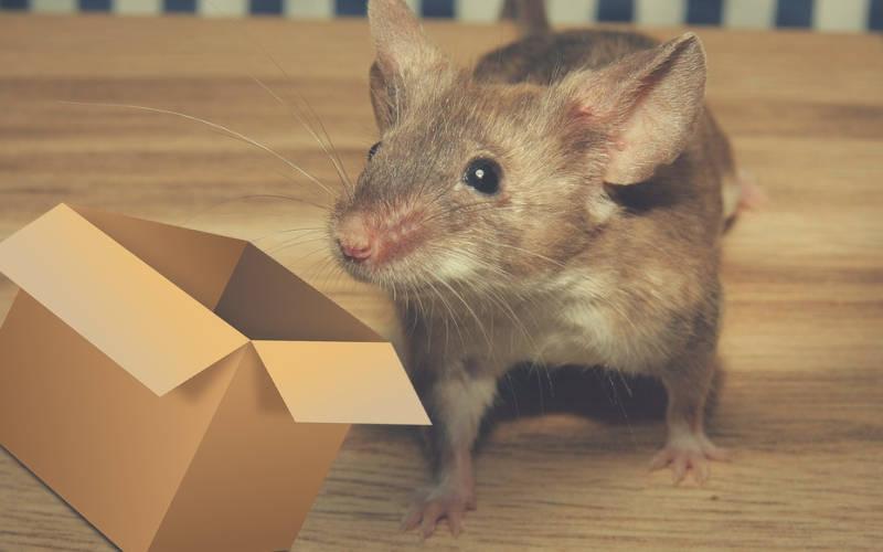 piège à souris pour vite attraper des souris