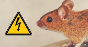 piège à souris électrique