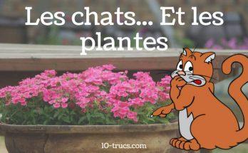 Comment éloigner les chats des plantes