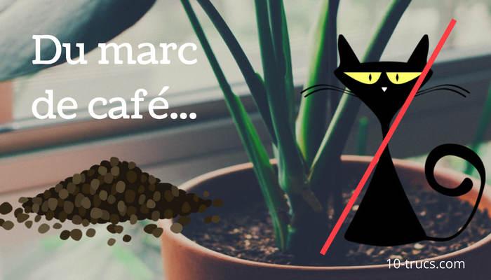 Marc de café pour éloigner les chats des plantes intérieures et extérieures