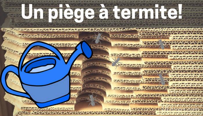 piege anti termites