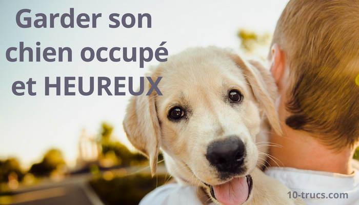 chien heureux et occupé