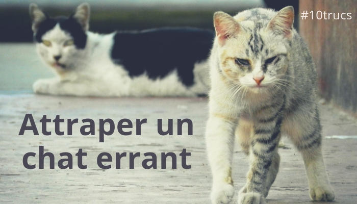comment attraper un chat errant