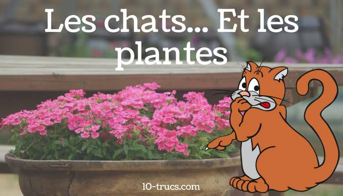 Comment �©loigner les chats des plantes
