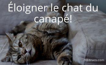 répulsif chat pour protéger le canapé