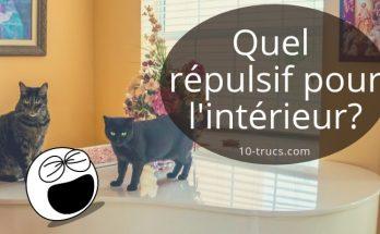 répulsif chat pour l'intérieur de la maison