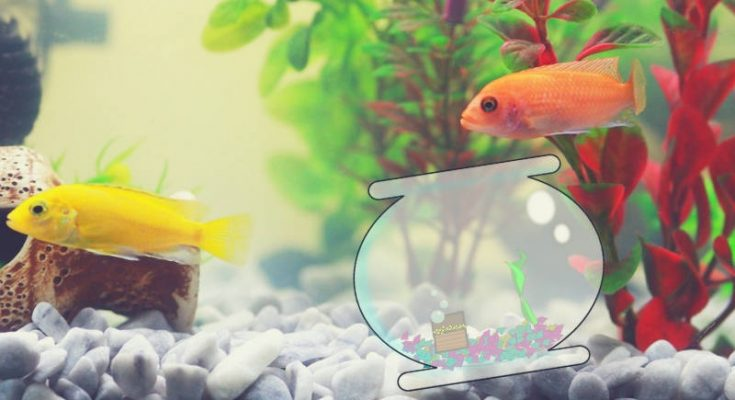 Comment nettoyer un aquarium de poissons