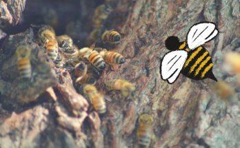 comment éloigner les abeilles