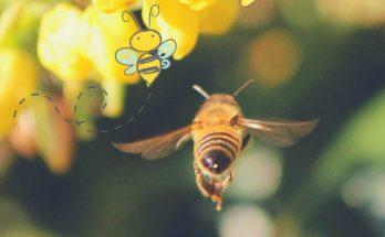 comment sauver les abeilles et les aider