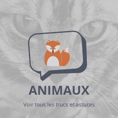 Animaux, trucs et astuces sur les animaux