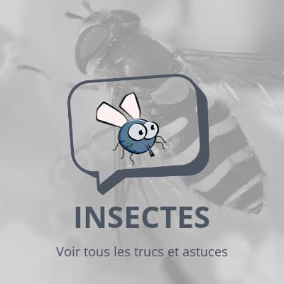 Insectes, tous les trucs et astuces sur les insectes