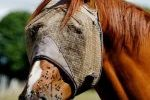 Anti mouche pour protéger les chevaux des mouches