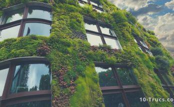 faire un mur végétal intérieur et extérieur
