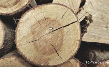 Détourner une souche d'arbre en meuble