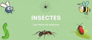 anti insectes, les trucs et astuces contre les insectes