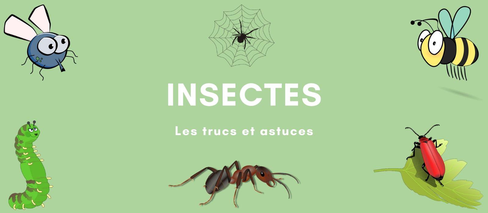 Astuces Naturelles Pour Se Débarrasser Des Fourmis insectes: astuces et répulsifs anti insectes