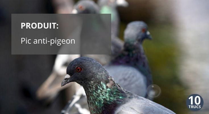 Pic anti pigeon et anti oiseaux envahisseurs