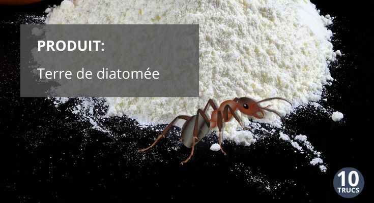 Terre de diatomée, insecticide naturel