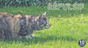 Répulsif extérieur pour éloigner les chats