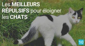 Répulsif naturel pour éloigner les chats