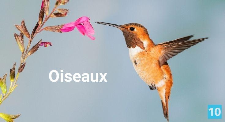 Truc pour les oiseaux