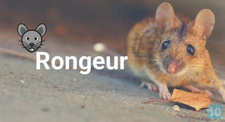 Trucs et astuces sur les souris, rats et rongeurs