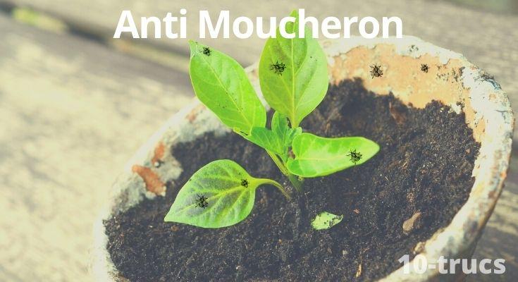 répulsif et remède anti moucheron naturel à tester à la maison