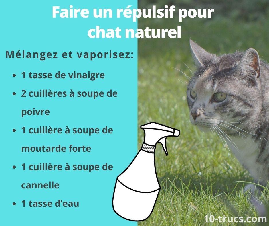 Comment faire du répulsif pour chat naturel