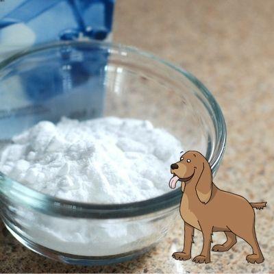 Remède de bicarbonate de soude contre la mauvaise haleine du chien