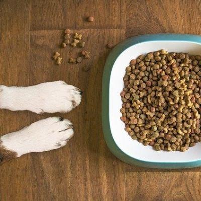 Une bonne nourriture pur chien contre la mauvaise haleine