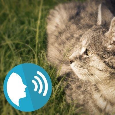 Appeler son chat perdu d'une forte voix