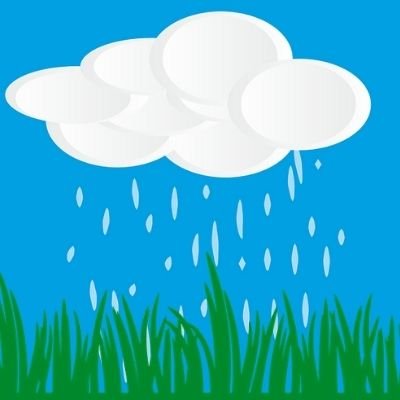 Avoir une pelouse humide pour éviter les taches d'urine de chien
