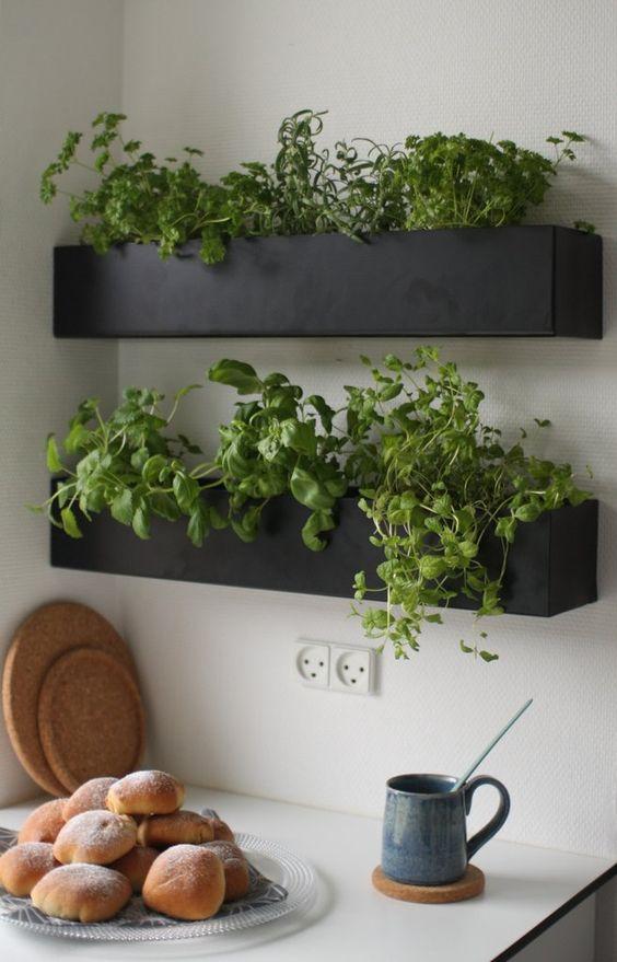faire pousser des fines herbes dans la cuisine
